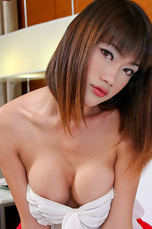 Big Tits Ladyboy Bee